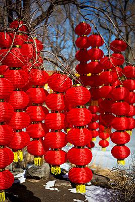 Lampions an einem Baum - p817m2159116 von Daniel K Schweitzer