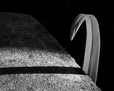 p1578m2157520 by Marcus Hammerschmitt