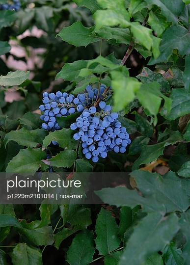 Wild berries - p1229m2101014 by noa-mar
