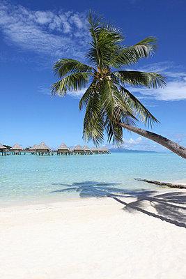 French Polynesia - p045m696827 by Jasmin Sander