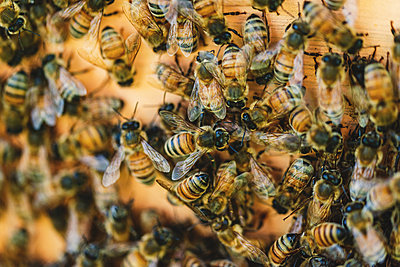Beehives, Bees and Honey - p1335m2109596 by Daniel Cullen