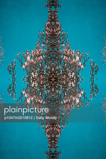 Abstract kaleidoscope pattern of magnolia tree canopy in flower against blue - p1047m2210812 by Sally Mundy