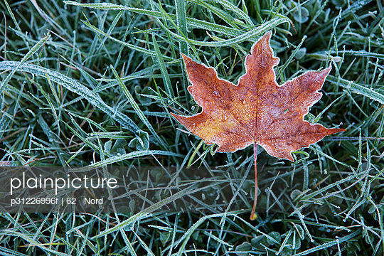 Autumn leaf on grass, close-up
