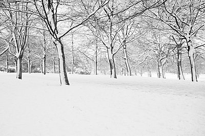 Park in Snow - p1072m829436 by Neville Mountford-Hoare