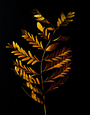 Golden coloured leaves - p1397m2054736 by David Prince