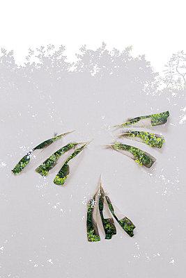 Bird feathers superimposed on a tree image - p1682m2260719 by Régine Heintz