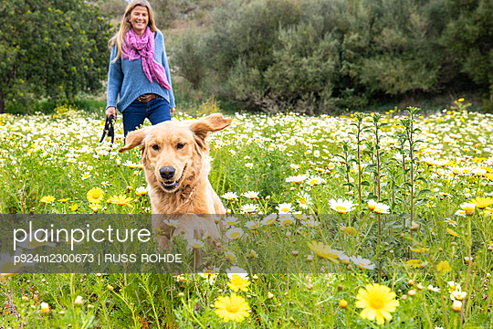 Spain, Mallorca, Smiling woman with Golden Retriever in blooming meadow - p924m2300673 by RUSS ROHDE