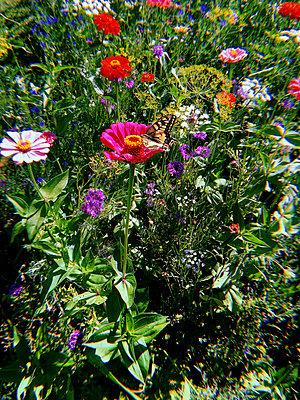 Bunte Blumen - p1189m2263783 von Adnan Arnaout