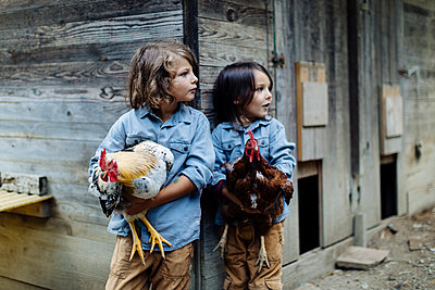 Two kids holding chickens on an organic farm - p300m2144416 by Sofie Delauw