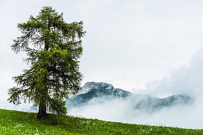 Nebel - p488m1200555 von Bias