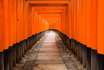 Torii gates at Fushimi Inari Shrine, Kyoto, Japan - p8552578 by David Clapp