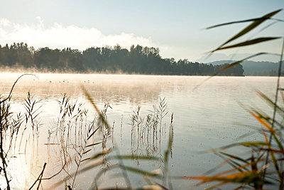 Morgennebel über dem See - p533m2044332 von Böhm Monika
