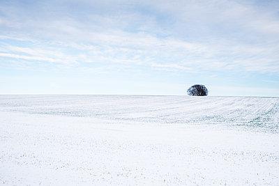 Großbritannien, Einzelner Baum am Horizont - p1057m2237827 von Stephen Shepherd