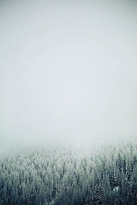 Trees against sky during foggy weather - p1166m1174574 by Cavan Images