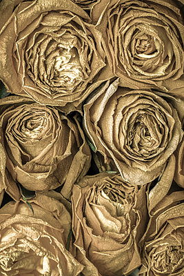 Dead roses - p1228m1488522 by Benjamin Harte
