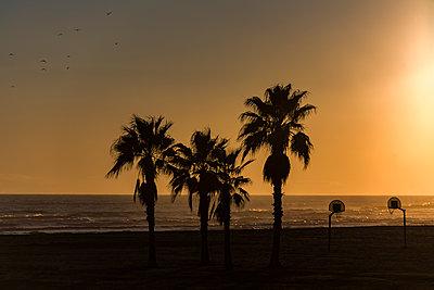 Spain, Palms on the Beach - p280m2253498 by victor s. brigola