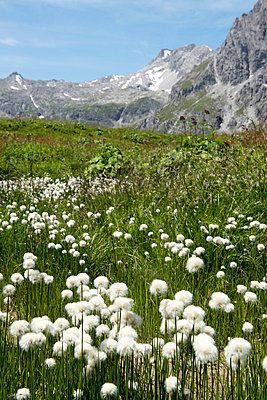 Near Lünersee, Vorarlberg - p451m932632 by Anja Weber-Decker