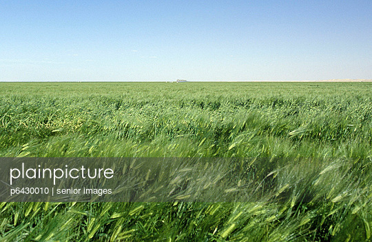 Kornfelde in der Sahara Wueste von Libyen  - p6430010 von senior images