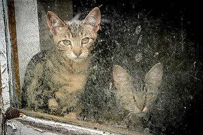Katzen am Fenster - p1275m1132078 von cgimanufaktur