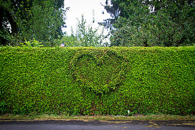 Hedge with heart-shaped trim - p417m716161 by Pat Meise