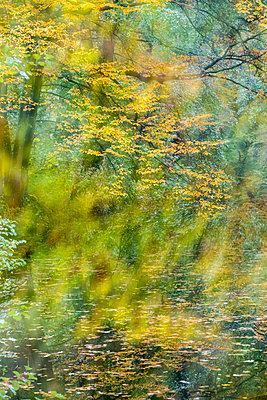 Herbstfarbenrausch - p739m1183661 von Baertels
