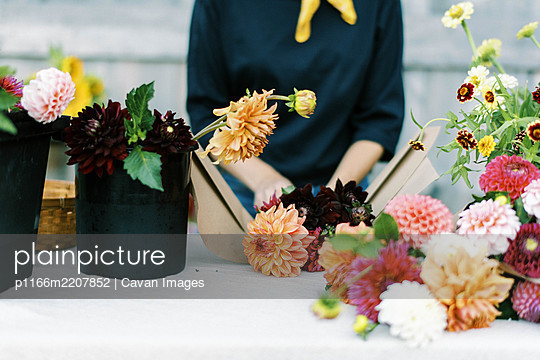 Female business owner and flower farmer arranging dahlia bouquets - p1166m2207852 by Cavan Images