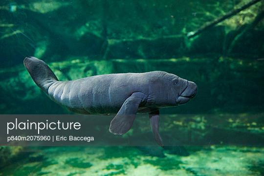 p840m2075960 von Eric Baccega