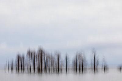 Baumgruppe im Lake Mattamuskeet - p1480m2229502 von Brian W. Downs