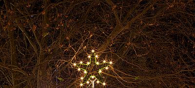 Weihnachtsstern - p6060667 von Iris Friedrich
