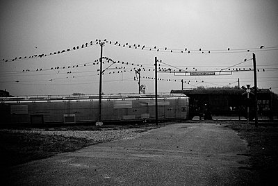 Train and birds - p1020m955112 by Aaron Alexandersson