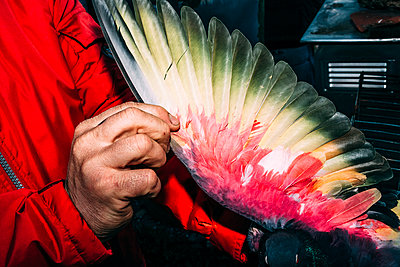 Person holding feathers - p1085m1477266 by David Carreno Hansen