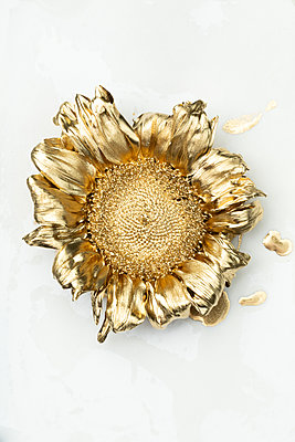 Sunflower painted in gold - p919m2195650 by Beowulf Sheehan