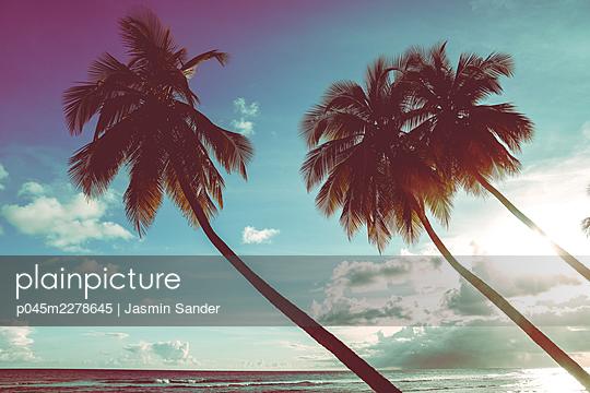 p045m2278645 by Jasmin Sander