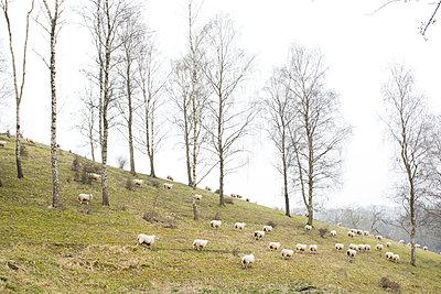 Frühling - p1057m900399 von Stephen Shepherd