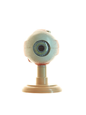 Model of a human eye - p1318m2031951 by Tom Seelbach