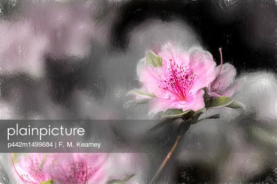 p442m1499684 von F. M. Kearney