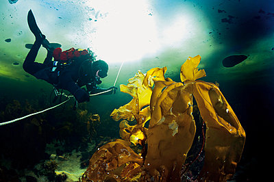 Russia, Arctic Circle Dive Centre, polar circle, ice diver - p300m975175f by Gerald Nowak