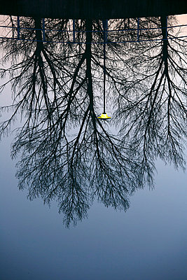 Spain, Ordesa National Park, bare trees reflected in River Cinca - p300m998913f by David Santiago Garcia
