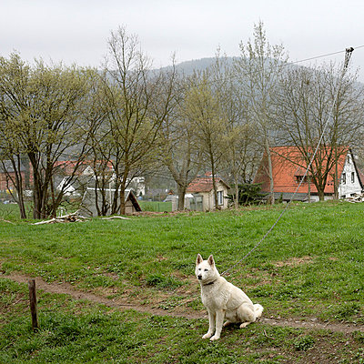 Guard dog - p9790003 by Bohnhof