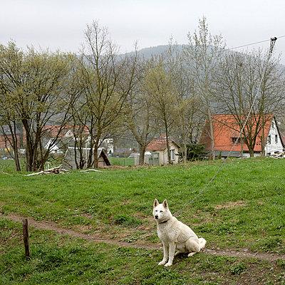 Hund in einem Dorf im Harz - p9790003 von Bohnhof