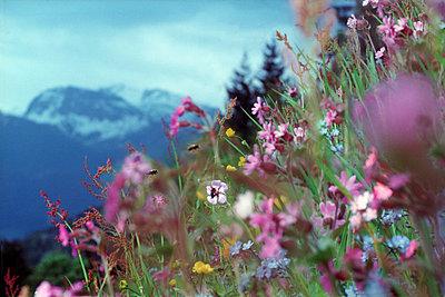 Bergwiese - p9792406 von Burkart