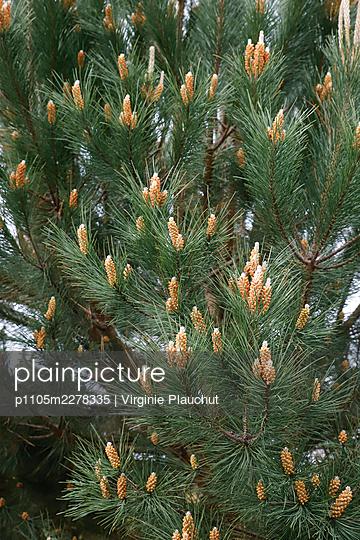 Tree - p1105m2278335 by Virginie Plauchut
