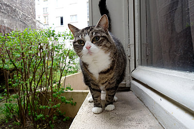 Cat walking on windowsill - p1189m1218627 by Adnan Arnaout