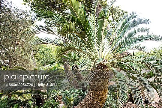 Palm garden - p1640m2254726 by Holly & John
