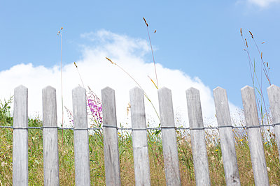 Blumenwiese hinterm Zaun - p606m1215550 von Iris Friedrich