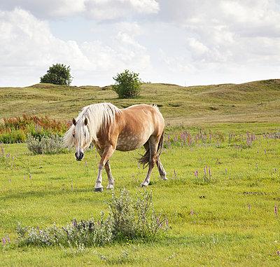 Pferdeparadies - p606m890799 von Iris Friedrich