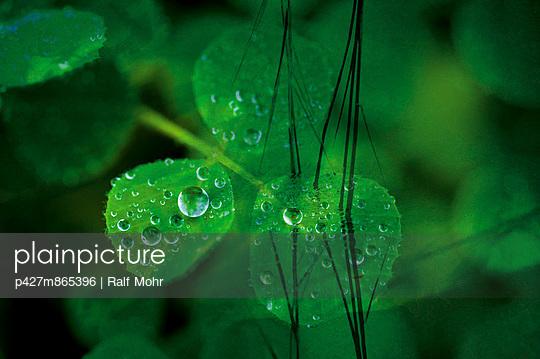 Sparkle - p427m865396 by Ralf Mohr