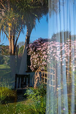 Garden with palm trees seen through window - p1057m2099894 by Stephen Shepherd