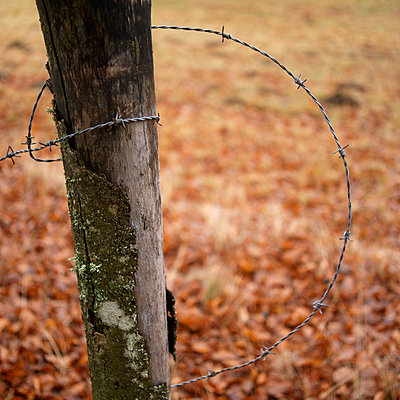 Wooden post and barbed wire - p8130231 by B.Jaubert