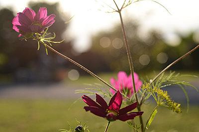 Wild flowers - p1631m2208663 by Raphaël Lorand